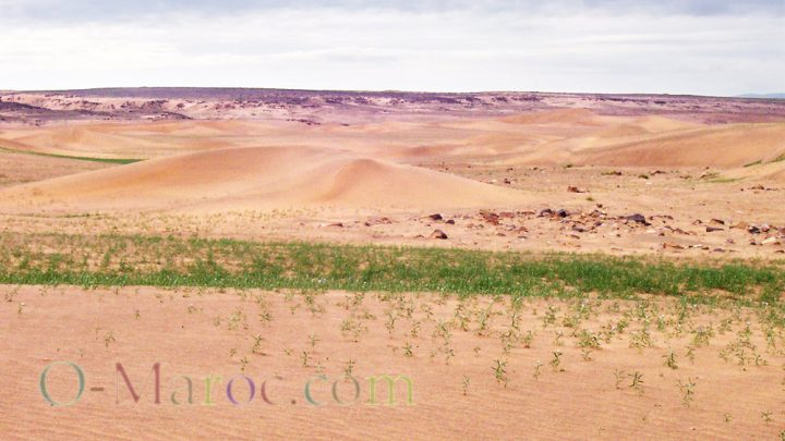 Sand dunes crossed by a little green grass
